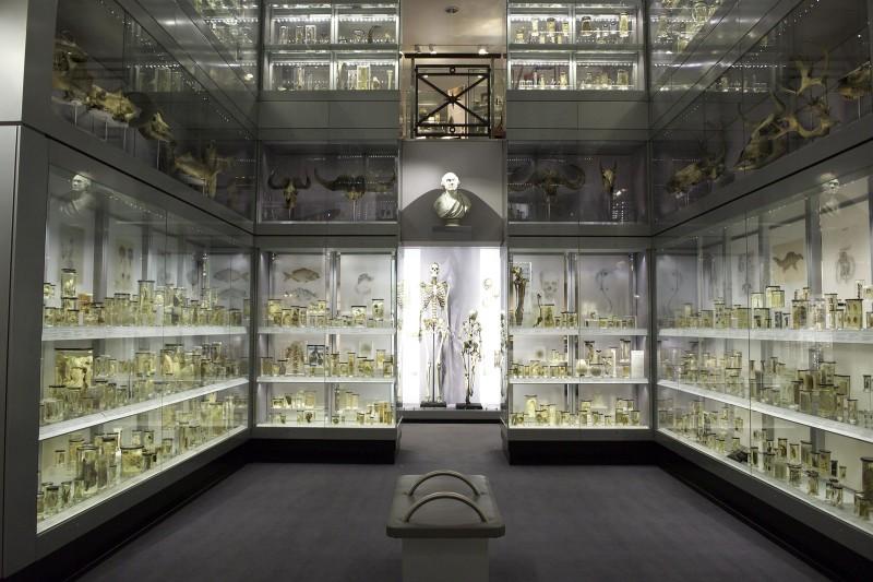 hunterian museum Crystal gallery 1LGE