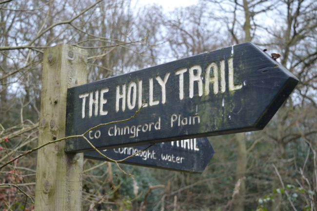 The Holly Trail sign in Epping Forest, London
