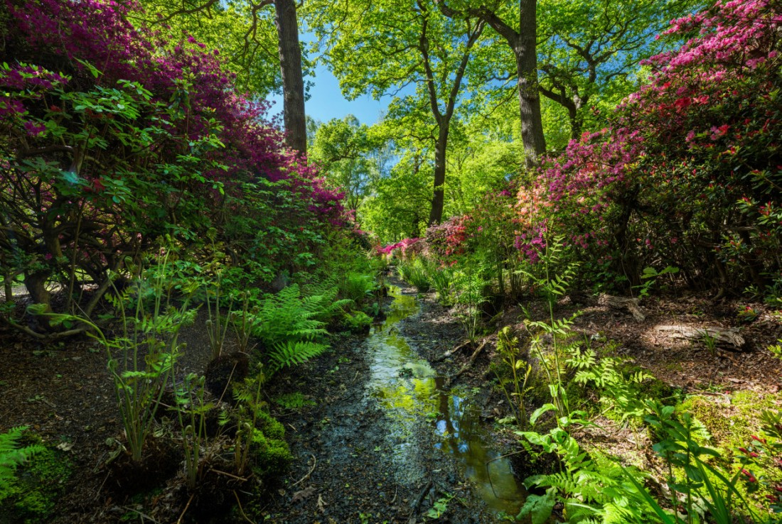 Isabella plantation, Richmond Park, london
