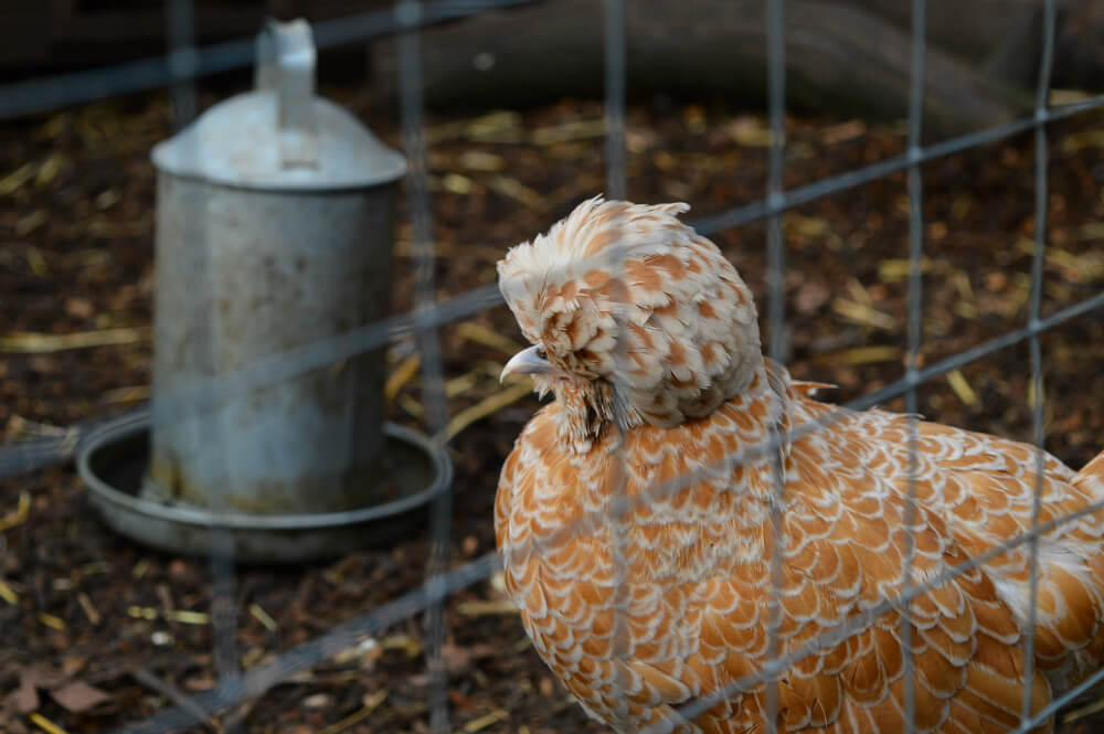 Vauxhall City Farm, London
