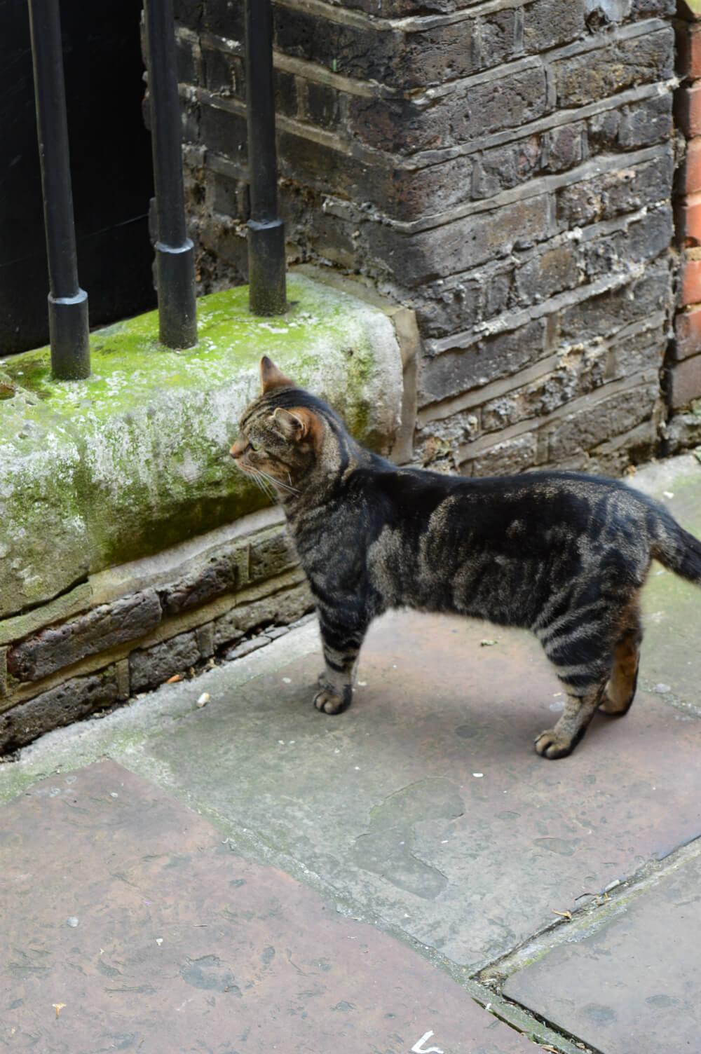 Cat in Shoreditch